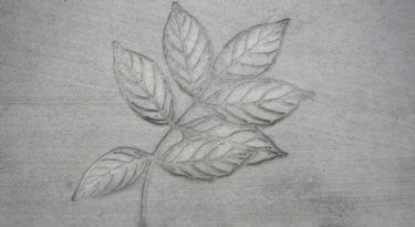 Ash Leaf Cluster Stamp Sample