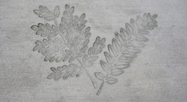Honey Locust Leaf Cluster Stamp Sample