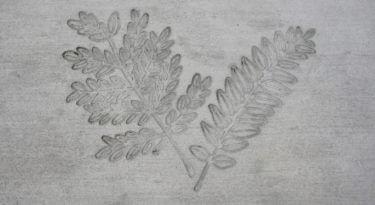 Honey Locust Leaf Cluster Stamp Sample