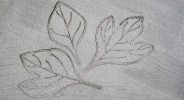 Sassafras Leaf Cluster Stamp Sample