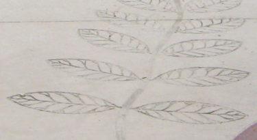 Arbor Leaf Stamp Arboretum